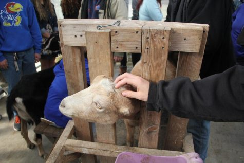 Animal Science class gets hands-on experience with goats