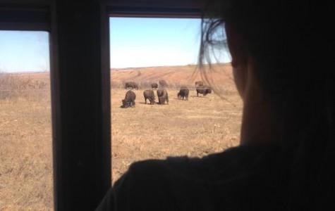 AP Environmental class studies nature at Konza Prairie during field trip