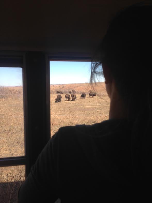Junior Natalie Cote looks out the window of a school bus at bison during an AP Environmental class field trip to the Konza Prairie on Nov. 12. Students made the trip to study nature.